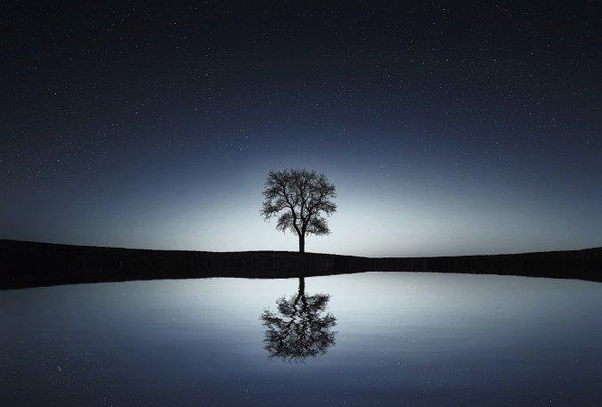tree-736881_1280